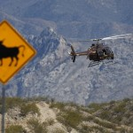 BLM WON'T SAY IF THEY'VE EUTHANIZED COWS IN RANCH STANDOFF