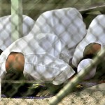 BREAKING! OBAMA TO RELEASE 6 MORE GITMO TERRORISTS!