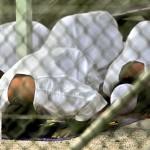 BREAKING! OBAMA TO RELEASE 6 MORE GITMO TERRORISTS!