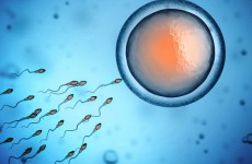 WHITE WOMAN SUES SPERM BANK FOR GETTING PREGNANT BY BLACK DONOR!