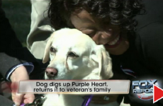 Dog Digs Up Purple Heart Medal In Backyard… What Happens Next Is AMAZING!