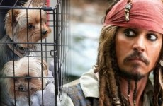 Megastar Johnny Depp Could Face 10-Years Prison For Bringing His Dogs To Work…