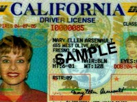 DHS APPROVES DESIGN OF DRIVER'S LICENSES FOR CALIFORNIA'S ILLEGALS!