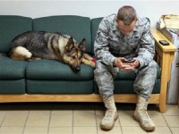 FALLEN SOLDIERS MARCH: FROM 'DOGS OF WAR' TO DOGS OF WARRIORS!