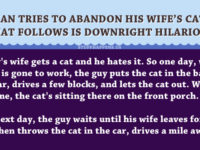 Man Tries To Abandon His Wife's Cat… What Follows Is Downright HILARIOUS!